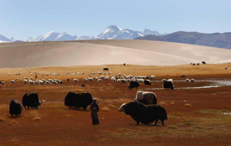 帕羊草原3